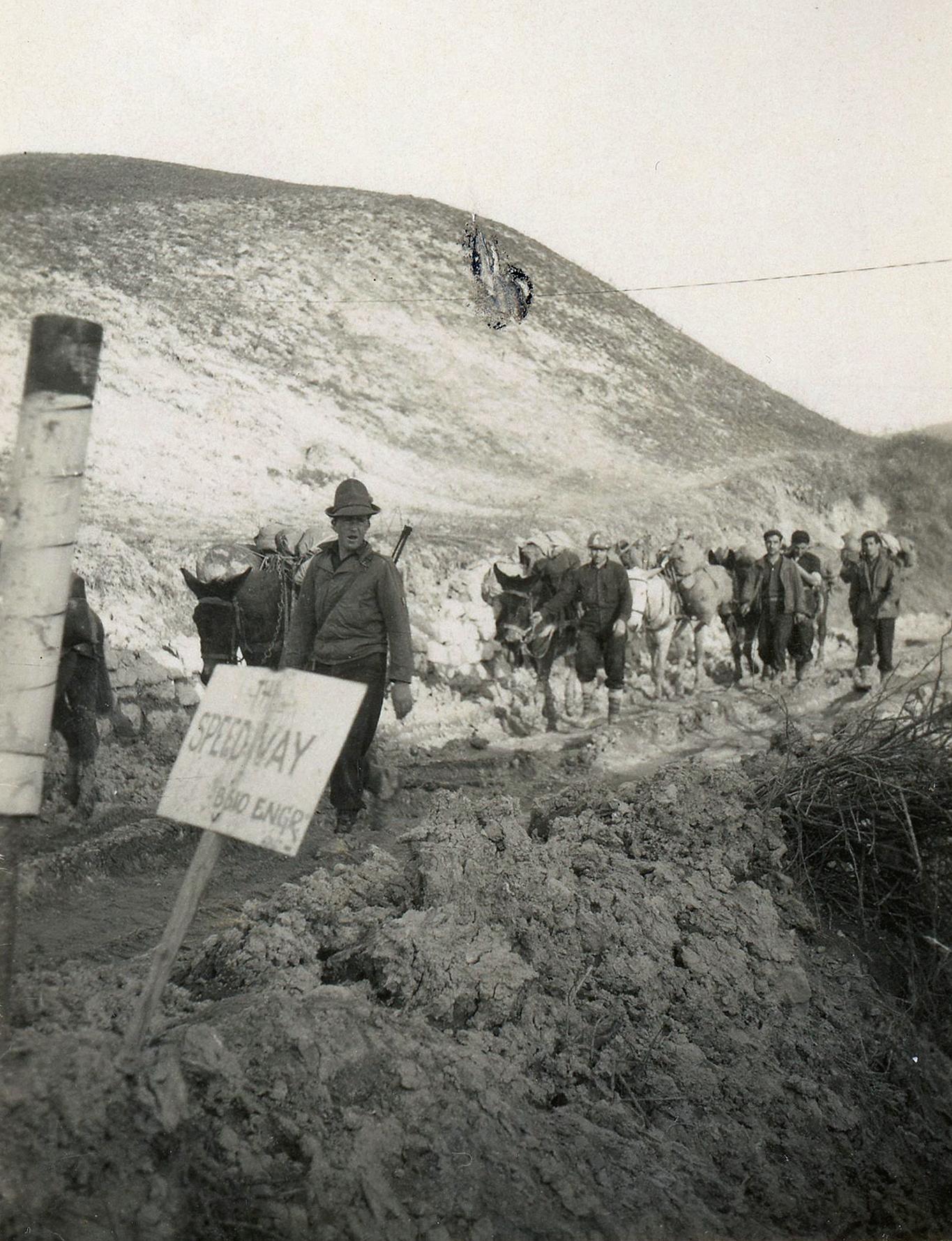 Mules Italy c. 1945